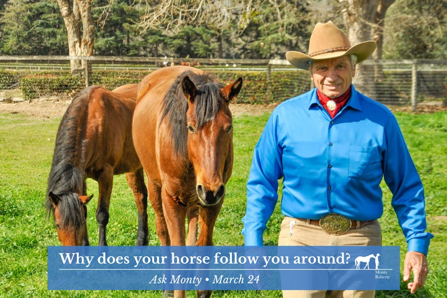 Why does your horse follow you around?