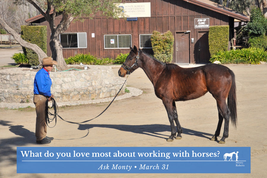 What do you love most about working with horses?