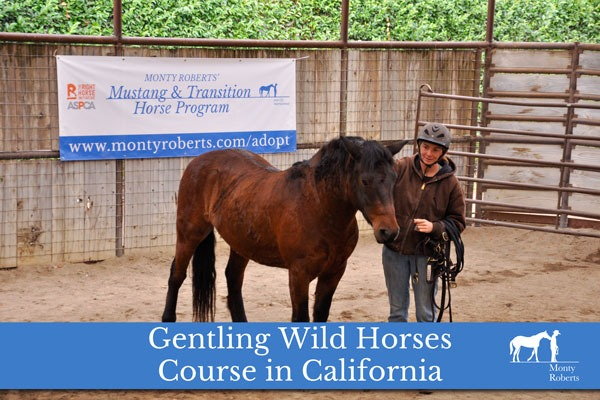 Gentling Wild Horses Course in California
