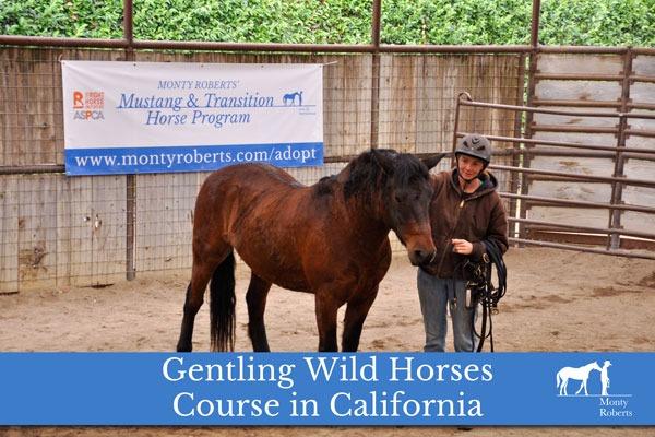 Press Release - Gentling Wild Horses with Monty Roberts in California