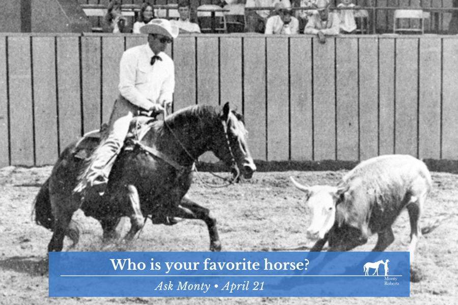 Ask Monty - Who is your favorite horse?