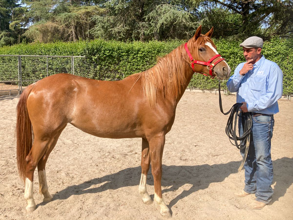 Denali - 2 year old feral mustang filly available for adoption