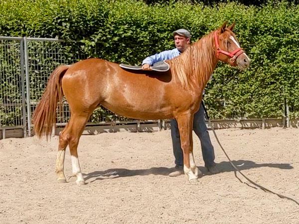 Denali's first saddle pad
