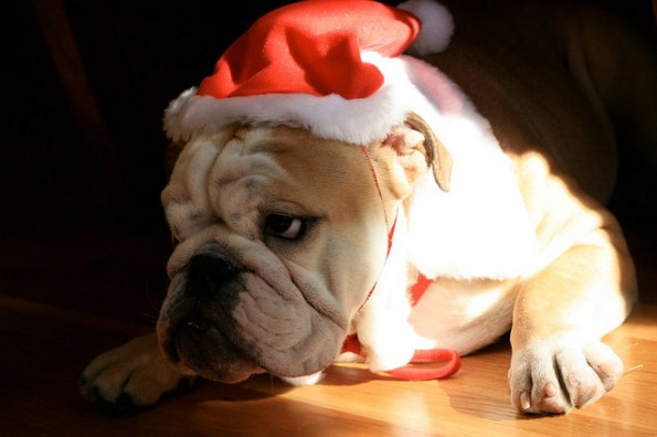 Christmas slow down a myth? – 4 reasons to swoop