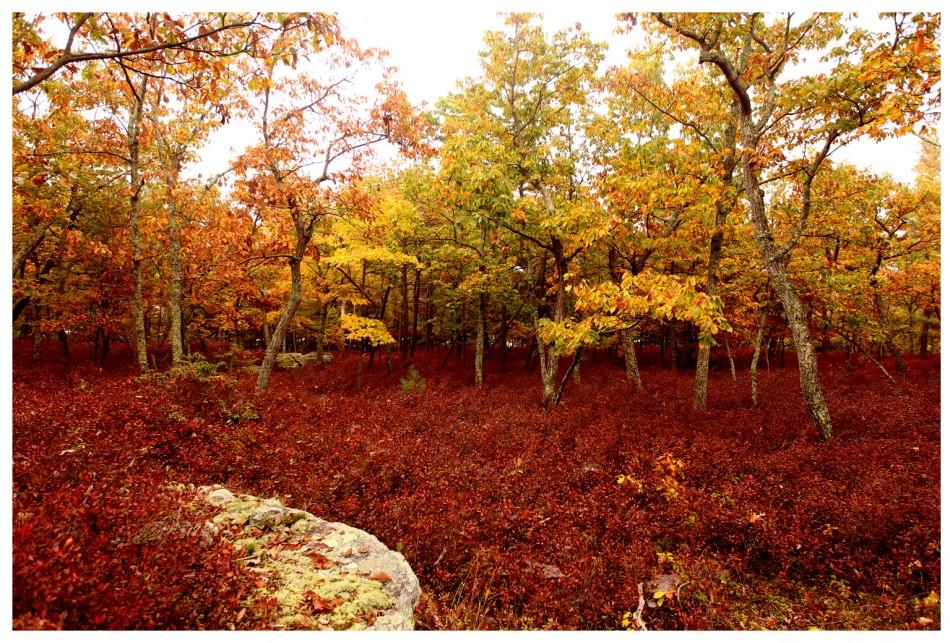 Minnewaska State Park Preserve 048