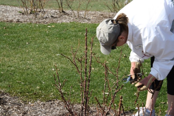 Planting Day 2011 – 22