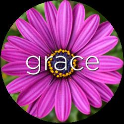 grace african daisy flower essence