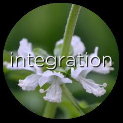 basil integration flower essence