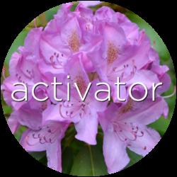 activator red clover flower essence