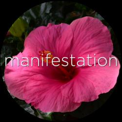 hibiscus manifestation flower essence