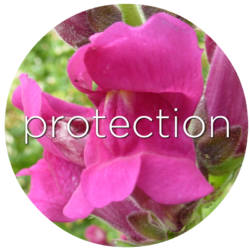 snapdragon protection flower essence