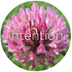 intention red clover flower essence