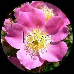 love rose flower essence