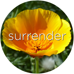 california poppy surrender flower essence