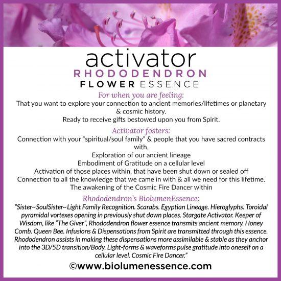Activator Rhododendron Flower Essence