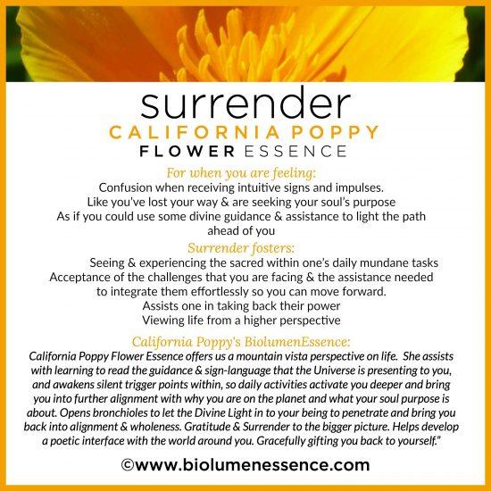 Surrender California poppy Flower essence