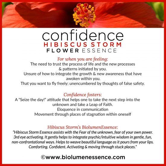 Confidence Hibiscus Storm Flower Essence