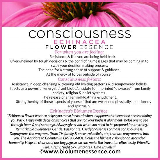 Consciousness Echinacea Flower Essence