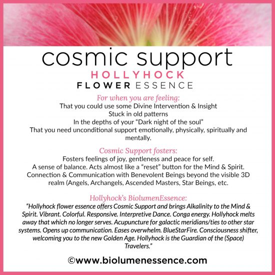 Cosmic Support Holly Hock Flower Essence