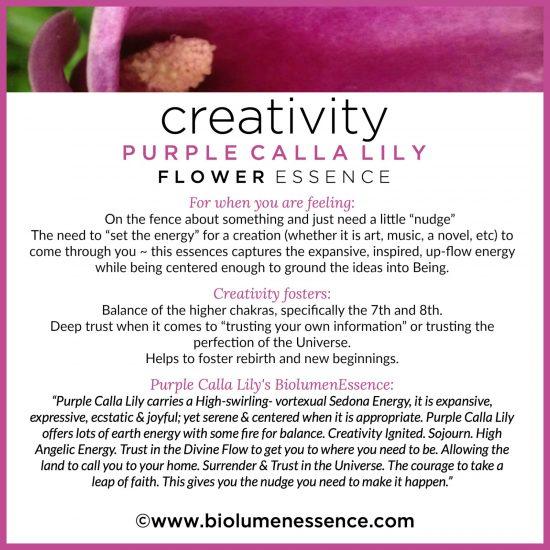 Creativity Purple Calla Lily Flower Essence