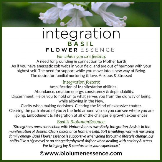 Integration Basil Flower Essence