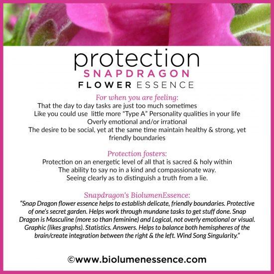 Protection Snapdragon card