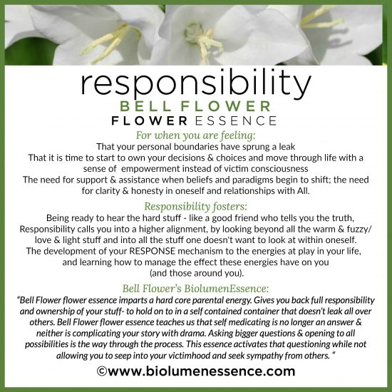 Responsibility Bell Flower Flower Essence