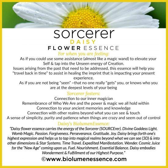 Sorcerer Daisy Flower Essence