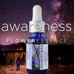 awareness lupine flower essence