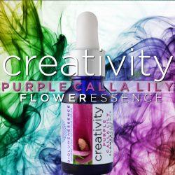 purple calla lily flower essence