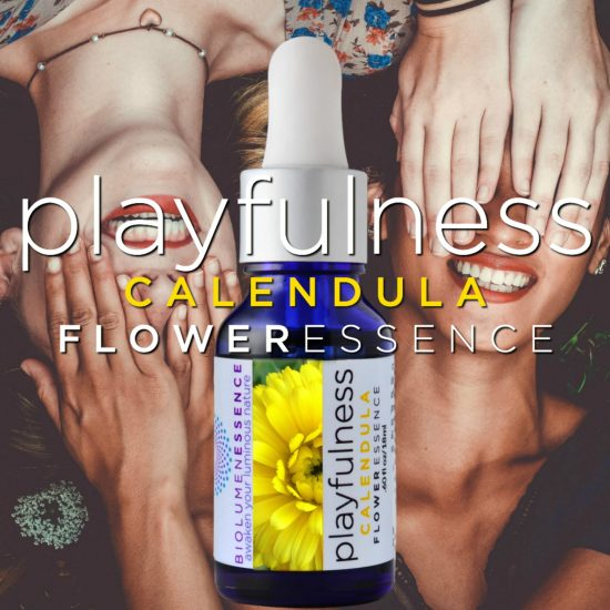 Calendula Playfulness Flower Essence