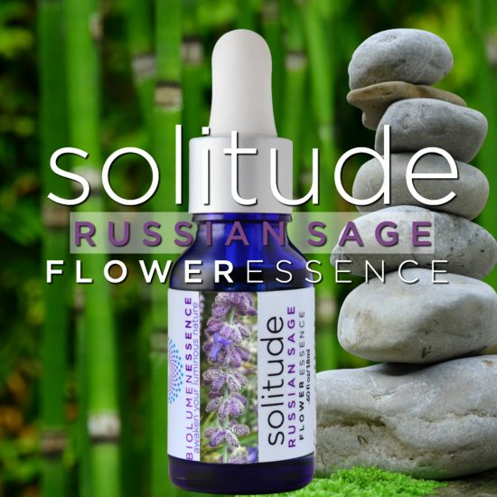 Solitude Russian Sage Flower Essence