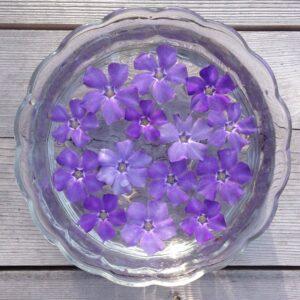 vinca flower essence