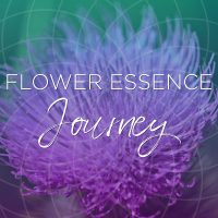 flower essence journey