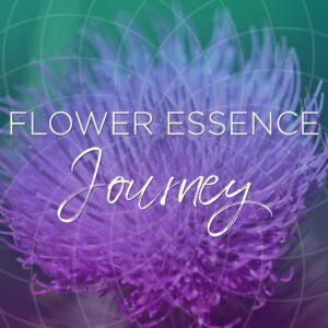 flower essence journey