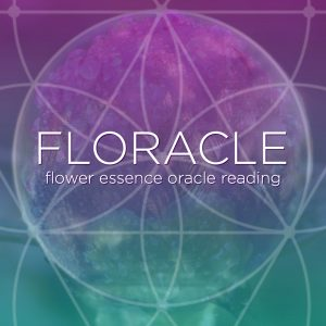 Floracle Flower Essence Oracle Reading