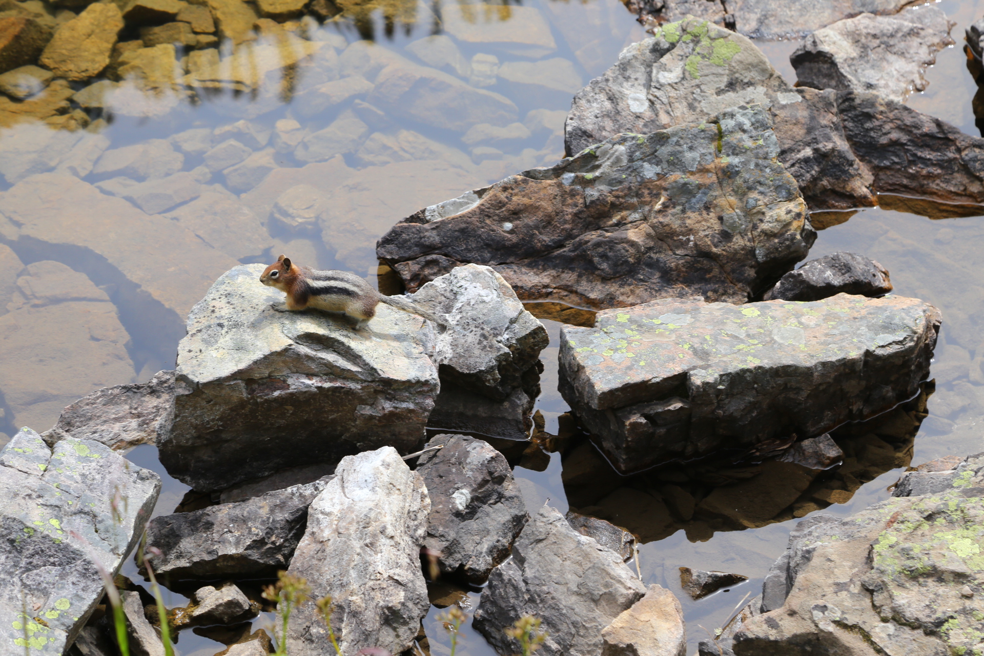 Erie Nick Lake Louise City Guide: Lake Agnes ground squirrel