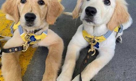 Service Dogs – A Perfect Match for Dog and Human
