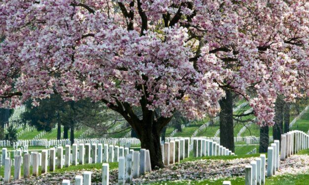 Memorial Day 2021 – Arlington National Cemetery