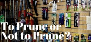 Saturday Talk: To Prune or Not to Prune @ Tallahassee Nurseries