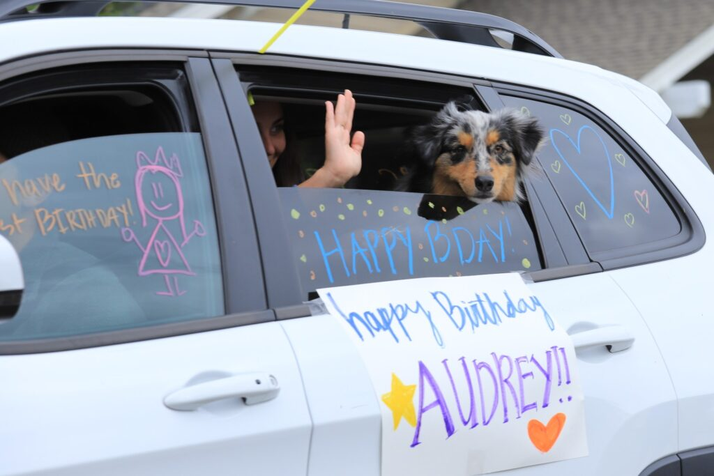 Dog in a car participating in a quarantine birthday parade.