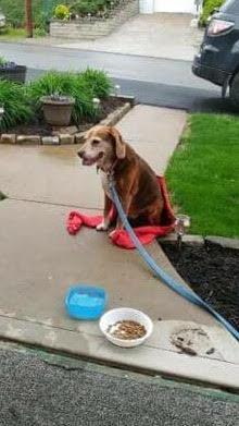 Found Dog:  School Street