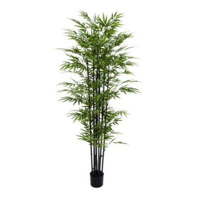 UMA PE POTTED BK BAMBOO TREE 38″W, 80″H