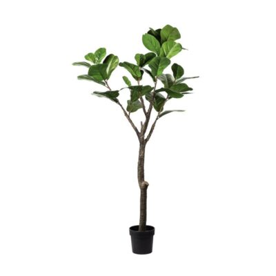 Potted Fettle Leaf tree