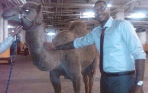 carmelo camel