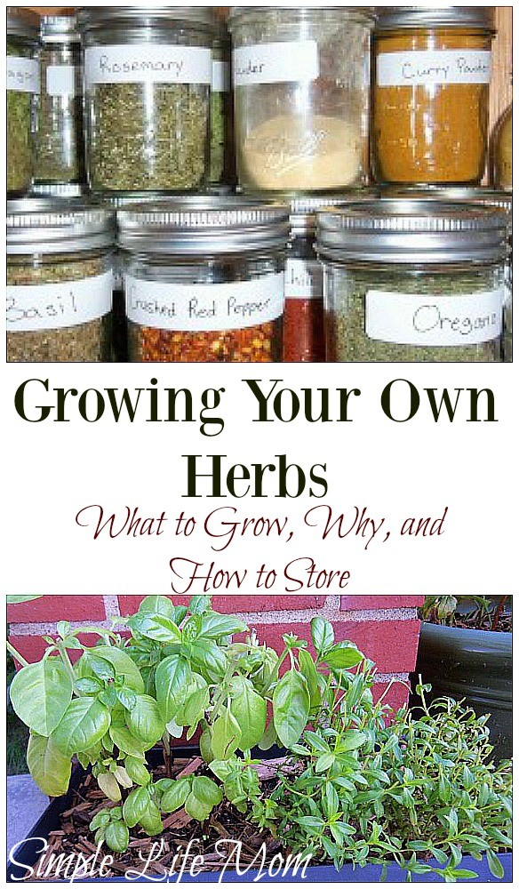 Growing Your Own Herbs from Simple Life Mom