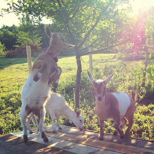 Featured on the Homestead Blog Hop from Hostile Valley Farm