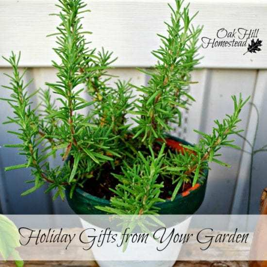 Homestead Blog Hop Feature - gifts from the garden