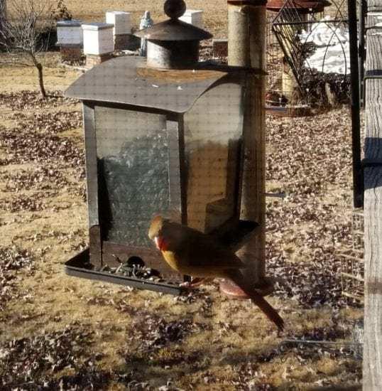Homestead Blog Hop Feature - Enjoying the Garden in Winter