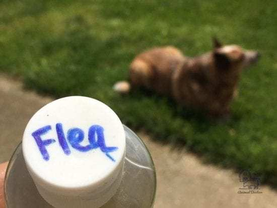 natural flea bath for dogs